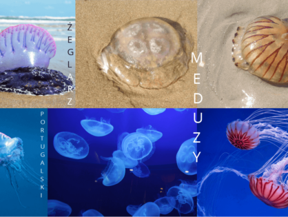 Oparzenie meduzy. Leczenie i zapobieganie. Pierwsza pomoc