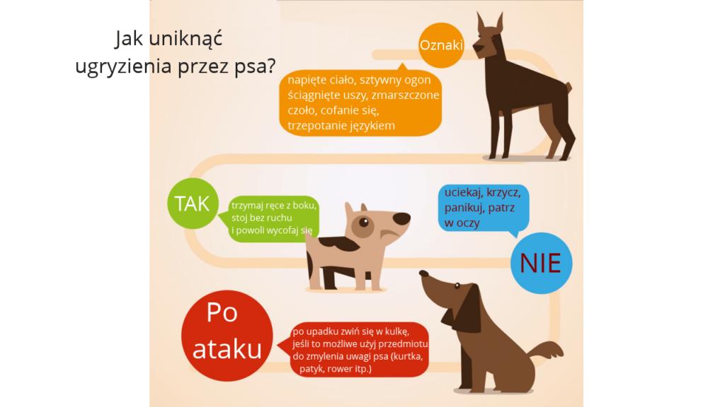 Ugryzienie przez psa, kota i inne zwierze. Pierwsza pomoc