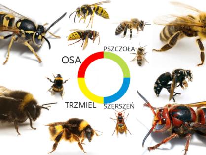 Użądlenie. Osy, pszczoły i krewni... Leczenie i zapobieganie