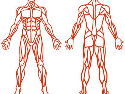 Bóle mięśni, zakwasy i skurcze mięśniowe. Leczenie i zapobieganie