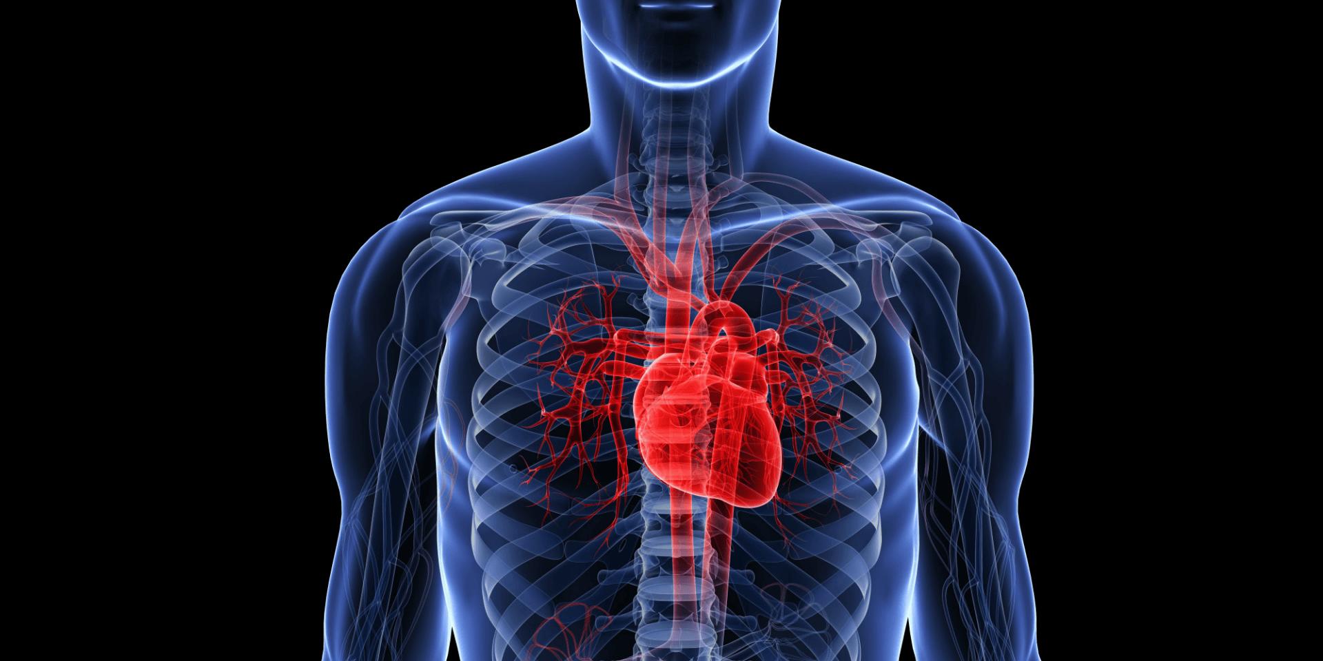 Wzmocnienie serca i układu krążenia. Dieta i zioła na serce oraz prokardiologiczny styl życia. Jak wzmocnić serce? KOMPENDIUM