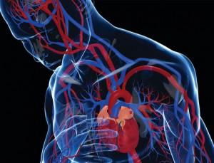 Wzmocnienie serca i układu krążenia