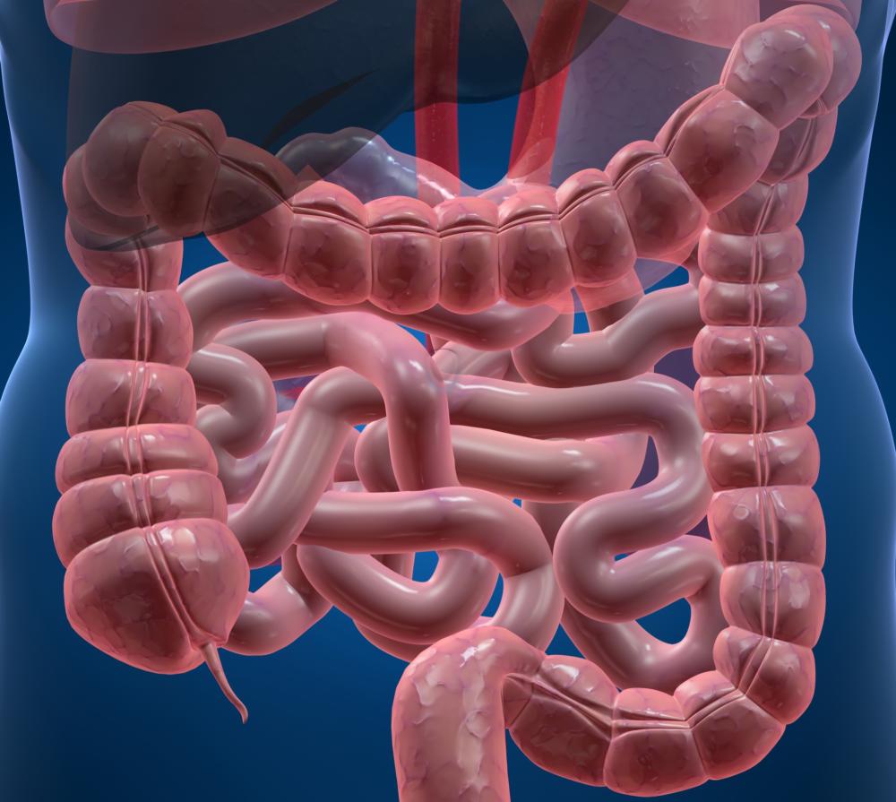 Oczyszczanie jelit. Jak oczyścić jelita? Dieta, zioła, lewatywa i hydrokolonoterapia MINIKOMPENDIUM