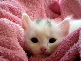 Kici, kici, kici – a psik! Alergia na kota