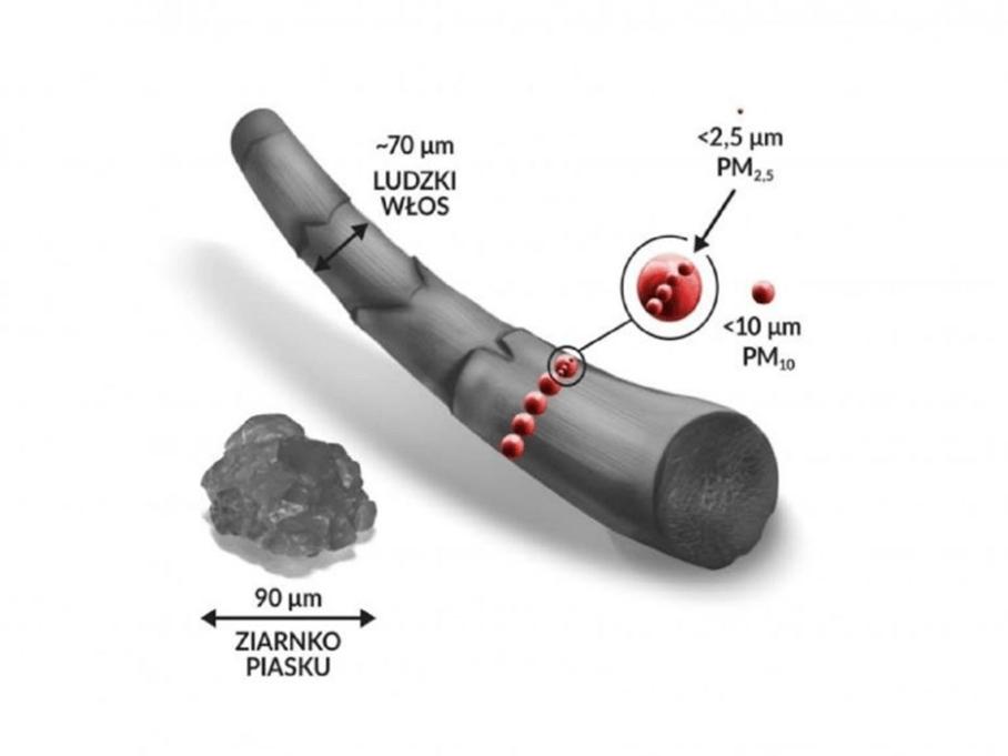 Rozmiar pyłów PM2,5 i PM10 w porównaniu do ludzkiego włosa