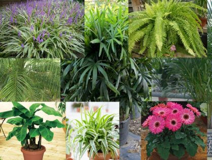 Kwiaty i inne rośliny oczyszczające powietrze z toksyn. Ponad 30 najlepszych filtrujących roślin doniczkowych do domu, mieszkania i sypialni RANKING