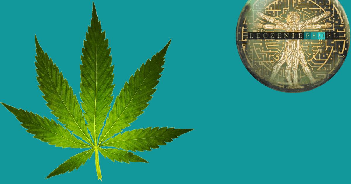 15 przykazań marihuanisty. Jak zdrowiej palić zioło? Zmniejszanie szkodliwości palenia cannabis i zalecenia profilaktyczne