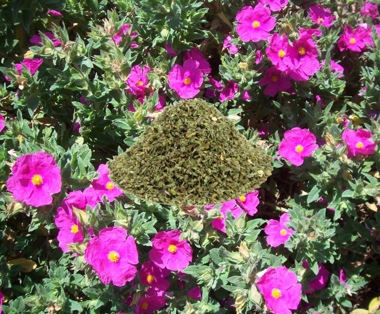 Czystek. Całoroczna ochrona zdrowia! Zdrowsza alternatywa zielonej herbaty!
